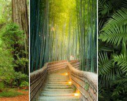 หน้าปกวอลเปเปอร์สั่งพิมพ์ลายวิวธรรมชาติป่าไม้ ใบไม้
