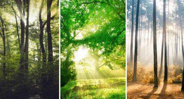 หน้าปกป่าไม้และแสงแดด