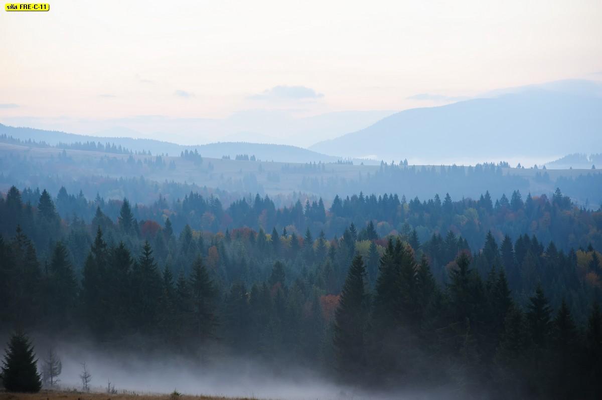 แต่งห้องธรรมชาติล้อมรอบ วอลเปเปอร์ลายป่าไม้กว้างและภูเขาฤดูหนาว