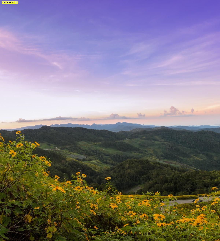 แต่งห้องสดใสและสดชื่นไปกับภาพวิวธรรมชาติดอกไม้บนภูเขาและท้องฟ้าสีม่วง