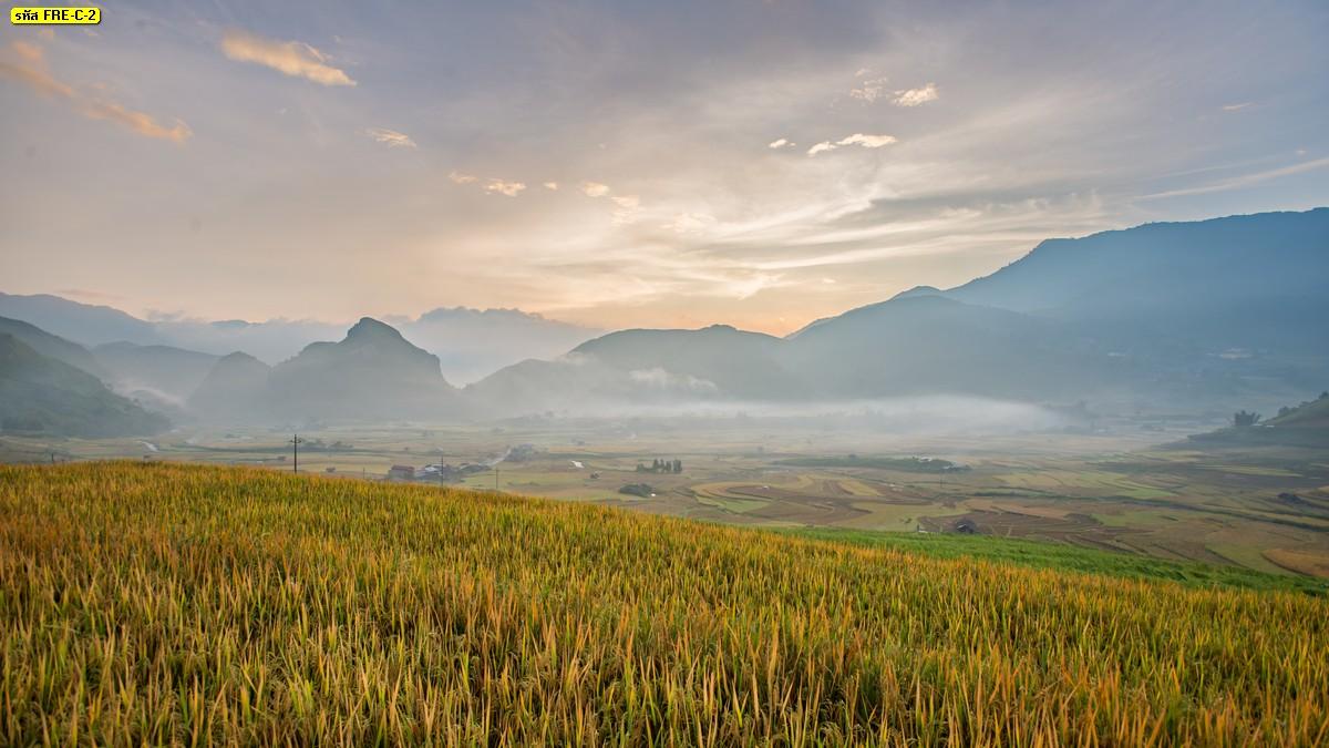 รูปภาพสั่งทำติดผนัง สั่งทำภาพวิวภูเขาและทุ่งนาขั้นบันไดสีทอง วอลเปเปอร์ฤดูหนาว
