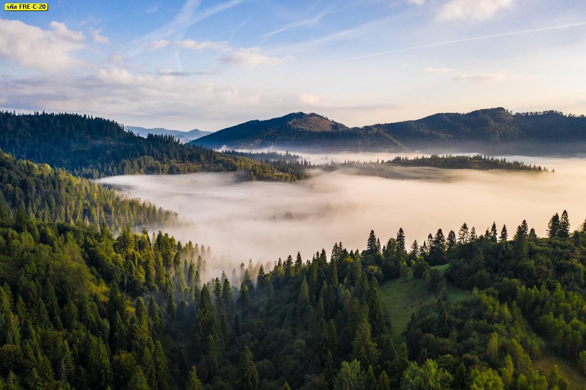 วอลเปเปอร์สั่งทำธรรมชาติต้นไม้บนภูเขา และบรรยากาศทะเลหมอก