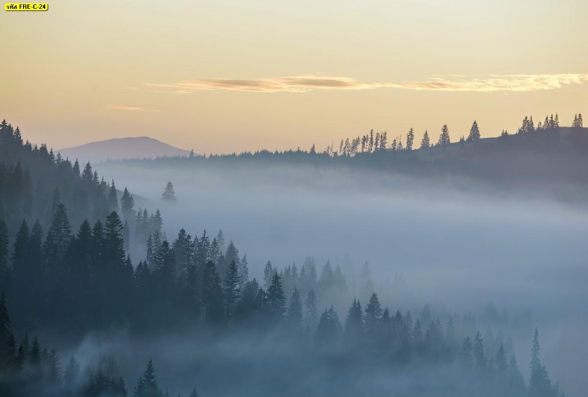 วอลเปเปอร์สั่งพิมพ์ลายวิวภูเขาต้นไม้กับทะเลหมอกยามเช้า