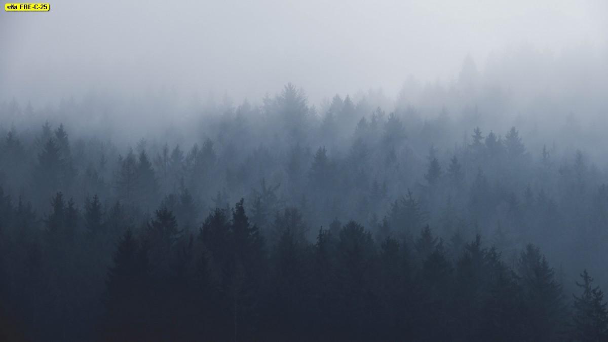 วอลเปเปอร์ลายป่าหมอกในฤดูหนาว
