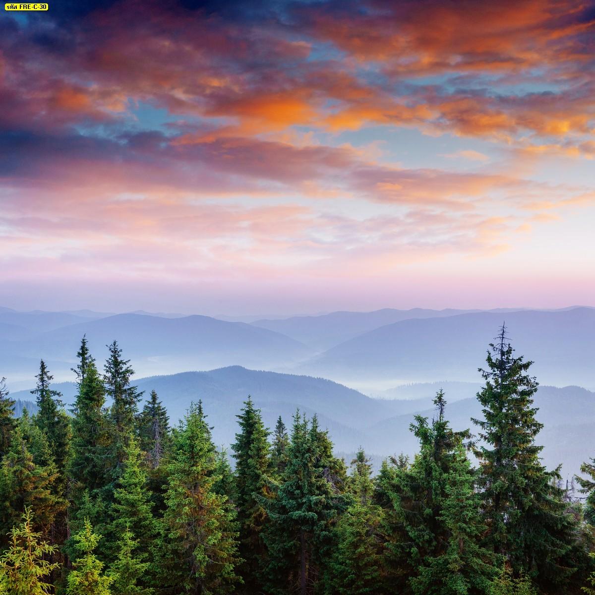 วอลเปเปอร์ธรรมชาติภาพต้นสนบนภูเขาและท้องฟ้าสีส้ม