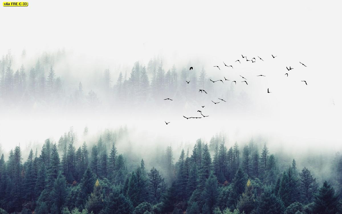 รูปธรรมชาติฝูงนกบินบนท้องฟ้าในป่าต้นสนโทนเย็นๆ