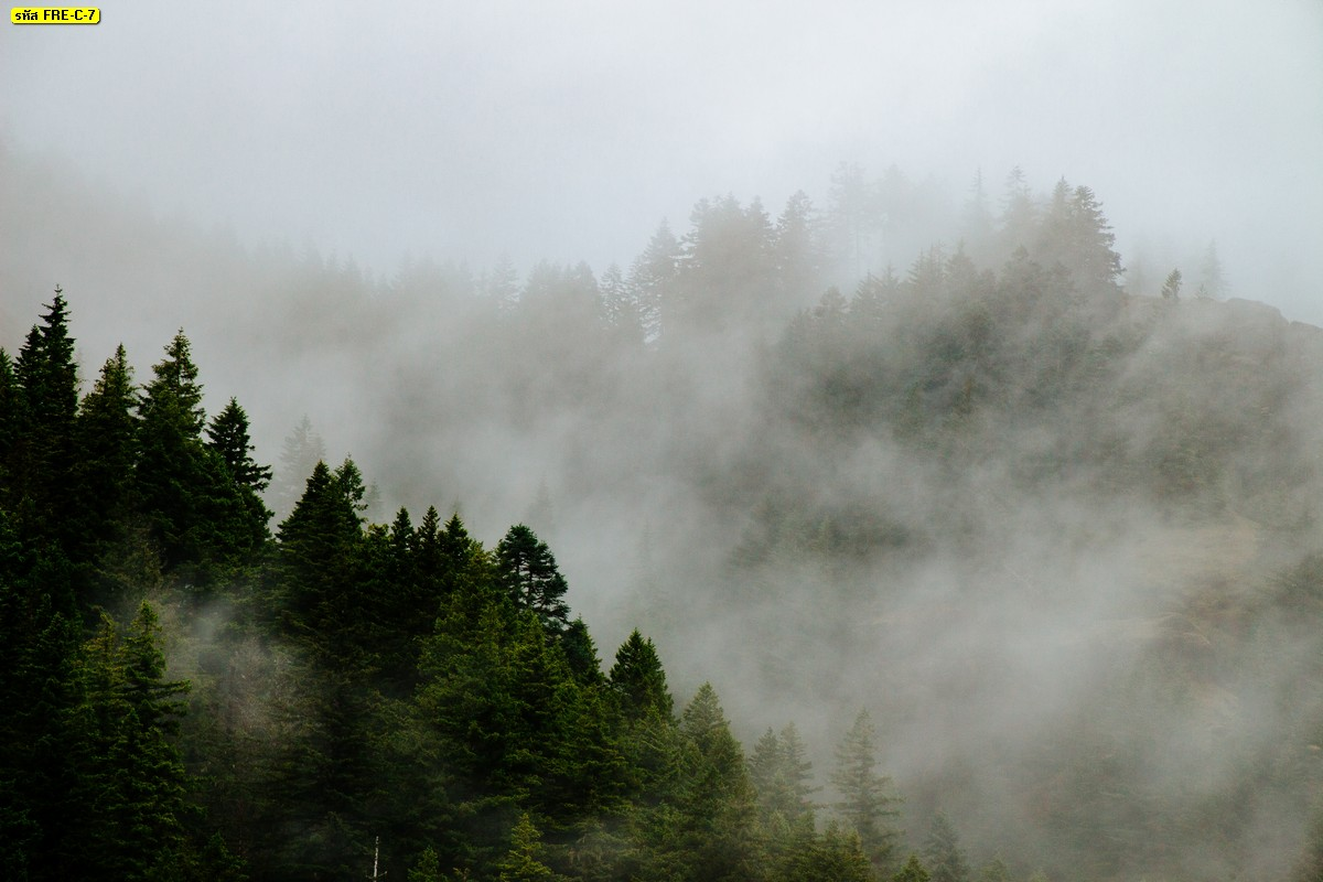 วอลเปเปอร์ภาพวิวป่าไม้และหมอกหนา ภาพบรรยากาศโทนเย็นสบายตา