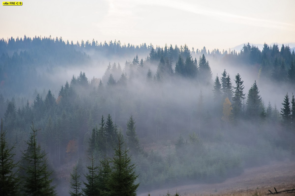 วอลเปเปอร์วิวป่าไม้และทะเลหมอกช่วงหน้าหนาว ภาพวิวธรรมชาติสวยๆ